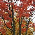 Autumn Duel by Todd Sherlock