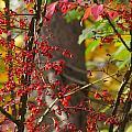 Autumn Excellence 6181 by Maciek Froncisz