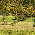 Autumn Farm Vista by Fran Gallogly