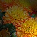 Autumn Flowers by Mikki Cucuzzo