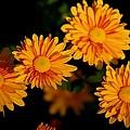 Autumn Flowers by Valia Bradshaw