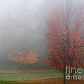 Autumn Fog by Barbara McMahon
