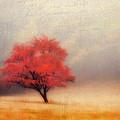 Autumn Fog by Darren Fisher