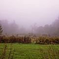 Autumn Fog by Tom Singleton