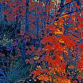 Autumn Foliage by Don Hammond