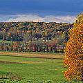 Autumn Foliage  by Kimberly Little