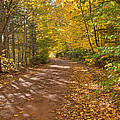 Autumn Foliage On A Country Road by Matt Dobson