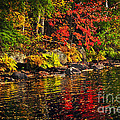 Autumn Forest And River Landscape by Elena Elisseeva