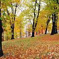 Autumn Forest by Mats Silvan