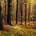 Autumn Forest by Natural Selection David Chapman