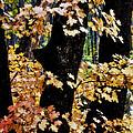 Autumn Forest  by Saija  Lehtonen