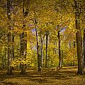 Autumn Forest Scene In West Michigan No.1140 by Randall Nyhof