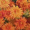 Autumn Garden Impressions by Regina Geoghan