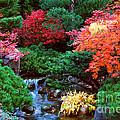 Autumn Garden Waterfall II by Nancy Mueller