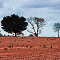 Autumn Geese by Bill Cannon