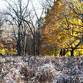 Autumn Glory by Bill Cannon