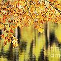 Autumn Glow by Darren Fisher
