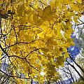 Autumn Glow by Rick Berk