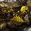Autumn Gold by Michael Friedman