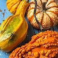 Autumn Gourds Still Life by Garry Gay
