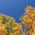 Autumn Has Arrived by Leann DeBord