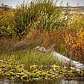 Autumn Hunting by Karen Ulvestad