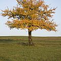 Autumn by Ian Middleton