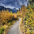 Autumn In Alberta by Tara Turner