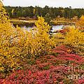 Autumn In Inari by Heiko Koehrer-Wagner