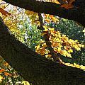 Autumn In London 7916 by Maciek Froncisz