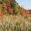 Autumn In New England by Kim Galluzzo Wozniak