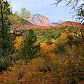 Autumn In Red Rock Canyon by Kristin Elmquist
