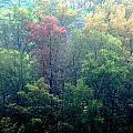 Autumn In Singapore by Glen Goh