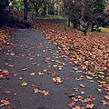 Autumn In St Fagans Park Cardiff by Ellie Coombes