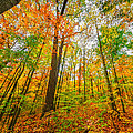 Autumn In The Hocking Hills by Brian Stevens