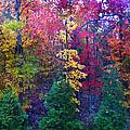 Autumn In Virginia by Nabila Khanam