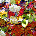 Autumn In Water by Marie Jamieson