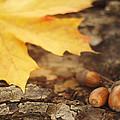Autumn by Iryna Mandryka