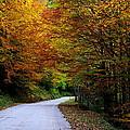 Autumn by Ivan Slosar