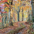 Autumn Lane by Heavens View Photography