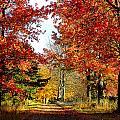 Autumn Lane by Jenny Gandert
