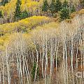 Autumn Layers by Idaho Scenic Images Linda Lantzy