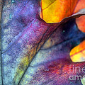 Autumn Leaf Abstract 2 by Tara Turner