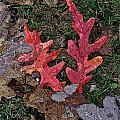Autumn Leaf Art IIi by Debbie Portwood