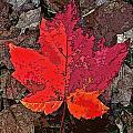 Autumn Leaf Art Iv by Debbie Portwood