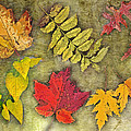 Autumn Leaf Collage by Debbie Portwood