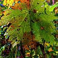 Autumn Leaf by Jeanette C Landstrom