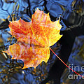 Autumn Leaf On The Water Level by Michal Boubin