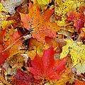 Autumn Leaves by Aimee L Maher ALM GALLERY