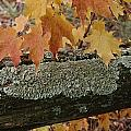 Autumn Leaves And A Lichen-covered Log by Stephen Sharnoff